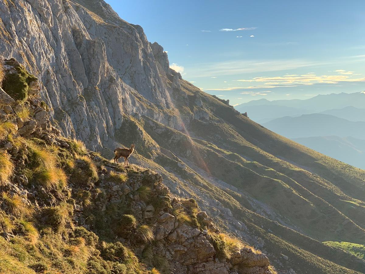 Rececho en Picos de Europa
